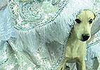 Cão folião